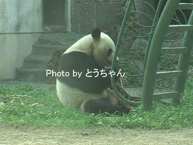 木竹のタケノコおいし~い