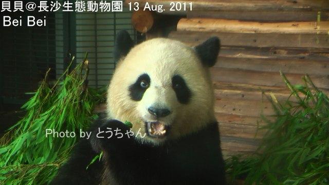 4-03-2_貝貝.jpg