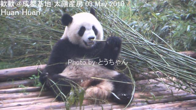 4-04-1歓歓01.jpg