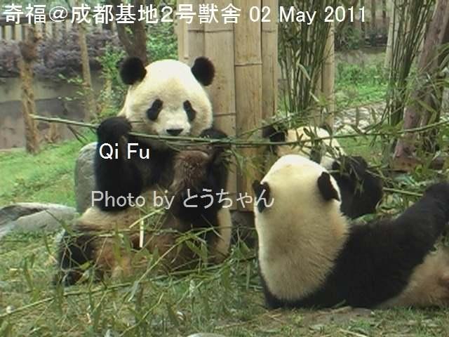 5-04-1_奇福01.jpg