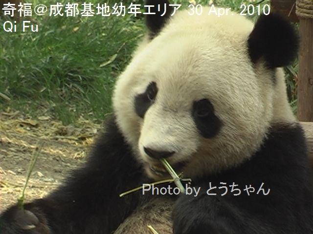 5-04-4_奇福04.jpg
