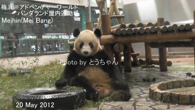 6-01-1_梅浜01.jpg