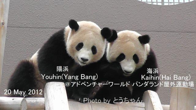 6-03-1海浜_6-04-1陽浜01.jpg