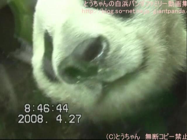 久し振り~のご挨拶(^^)(2008.04.27)2.jpg