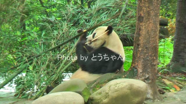 泰山09.jpg