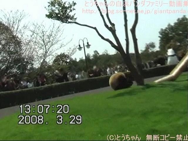 良浜花見の乱舞??(2008.03.29).jpg