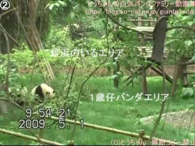 隣は仔パンダ!!