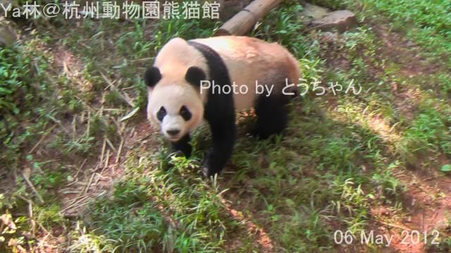 018_Ya林0506.jpg