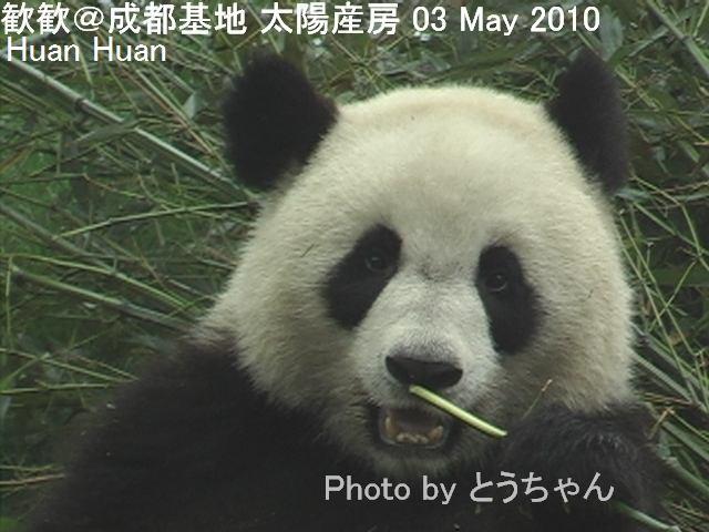 4-04-2歓歓02.jpg
