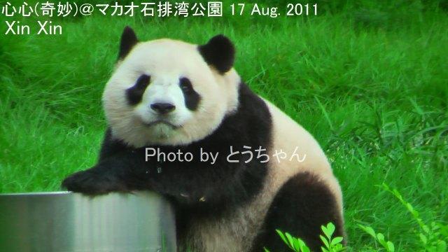 5-05-1_奇妙20110817.jpg