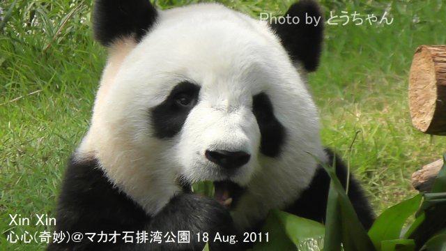 5-05-2_奇妙20110818.jpg